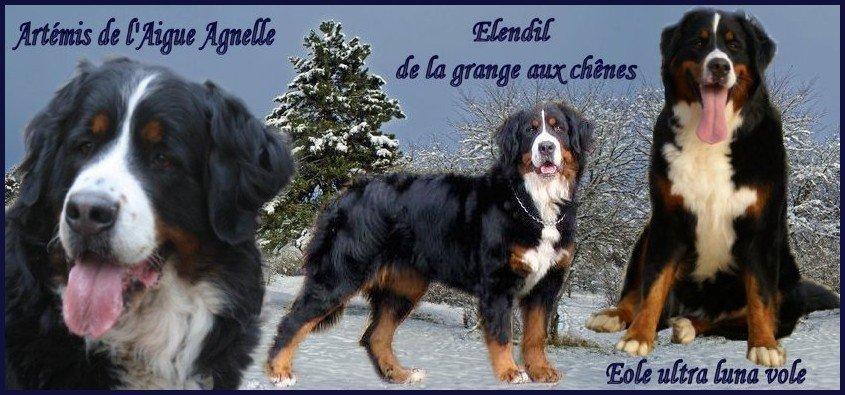 Annuaire Bouviers Bernois